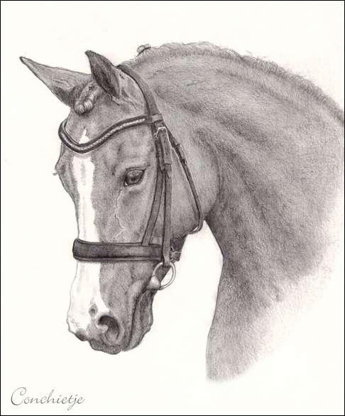Tek Arm In Het Gips Gt Pony Op Papier Bokt Nl